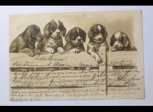 """Dackel, Hund, Zaun"" 1902, Prägekarte ♥ (31219)"