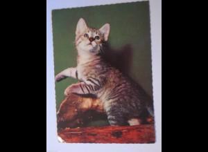 """""""Katzen, Baumstamm"""" 1972 ♥ (22864)"""