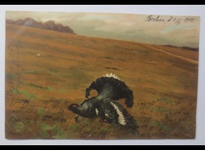 Truthahn, Landschaft, 1905 ♥ (37199)