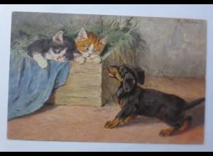 Katzen, Kiste, Katzen, Dackel, 1900 ♥ (65406)