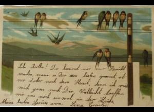 """""""Vogel, Schwaben, Strommast"""" 1902 ♥ (14562)"""