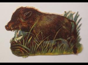 Oblaten, Wildschwein, Jahr 1900, 6 cm x 4 cm ♥ (20996)