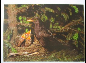 Vögel, Amsel, Dt. Jugendherbergswerk Spendenkarte 1967