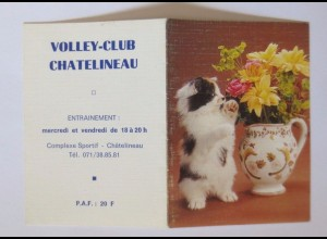 """""""Katzen, Taschenkalender, Werbung"""" Jahr 1988 ♥"""