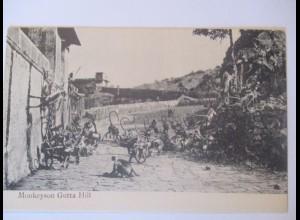 Affen, Monkeyson Gutta Hill, ca. 1910