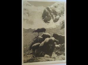 """Topographie, Am Boval Gletscher, Berge, Schafe"" 1928 ♥"