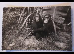 """""""Affen, Schimpansen"""" 1930 ♥"""