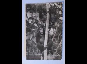"""""""Affen, Schimpansen"""" 1956 ♥ (27108)"""