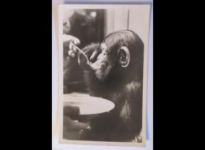 """""""Affen, Schimpansen, Teller, Essen"""" 1910 ♥"""