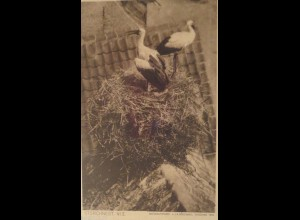 """Vogel, Storch, Storchnest"" 1910 ♥ (16768)"