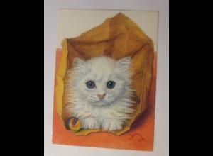 Katzen, White Kitten, 1980, Christopher Downing ♥ 11