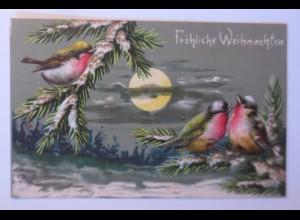 Weihnachten, Vogel, Tannenzweige, Vogel, Mond, 1908, Prägekarte ♥ (67324)