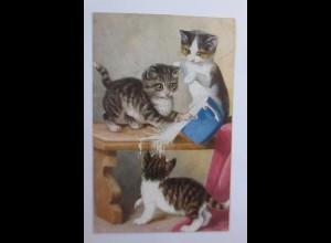 Katzen, Katzenbaby, Topf, Milch, 1928 ♥ (37464)
