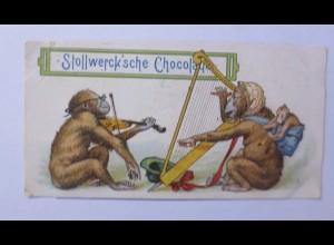 Stollwerck, Gruppe 187, Nr.4, Album Nr.5, Affen, Musizieren ♥