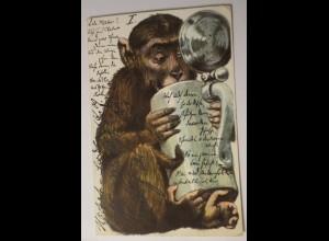 """""""Personifizierte, Vermenschlicht, Affen, Bierkrug"""" 1902 ♥ (24788)"""