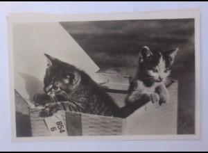 """""""Katzen, Korb"""" 1930 ♥ (55842)"""