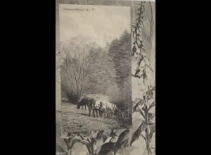 """""""Kuh, Ansichtskartenprobedruck, Rahmenmuster"""" 1900 ♥"""