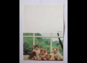 """""""Katzen, Taschenkalender"""" Jahr 2000 ♥"""